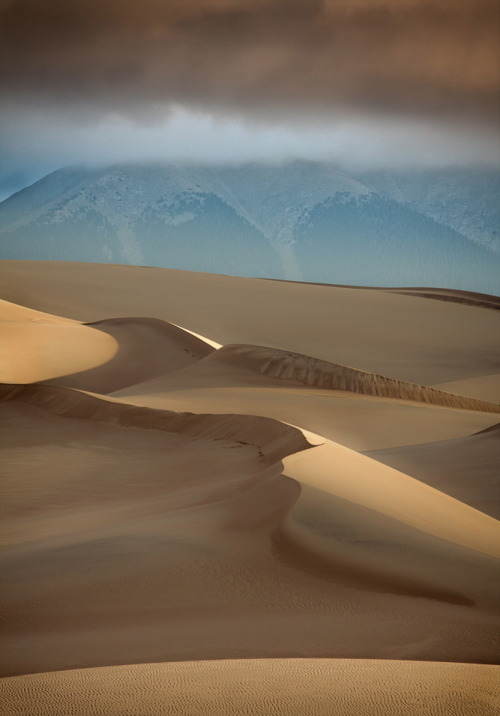 tupac:  Sand Dunes at Dawn by Rikk Flohr