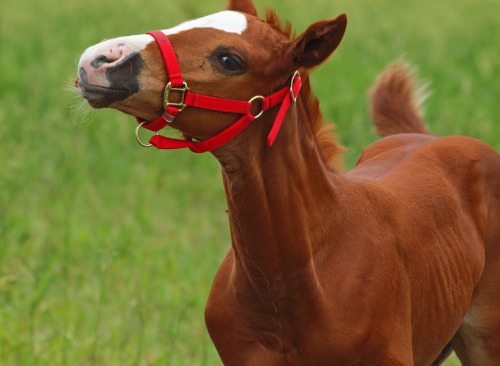 Sassy Girl!  For the Horse Lovers:) (by ml_thorsteinson)
