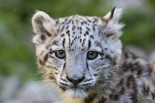 Mohan (by Michael Angst Photography)