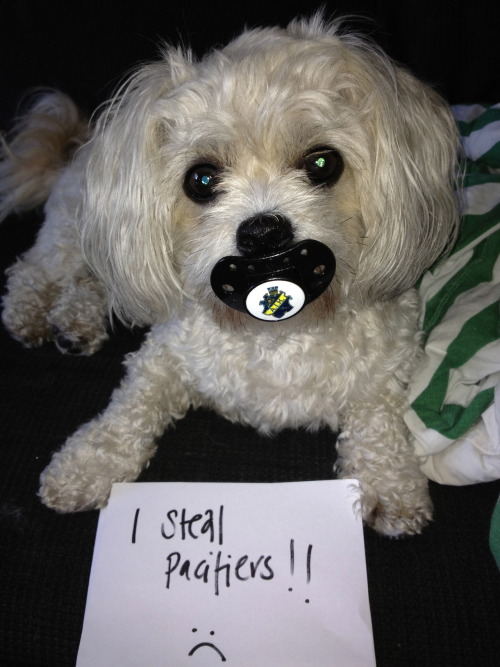 dogshaming:  I steal pacifiers from babies and children!!!