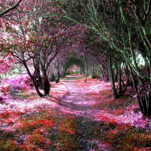 Tree Tunnel Sena de Luna Spain by Ave|evA