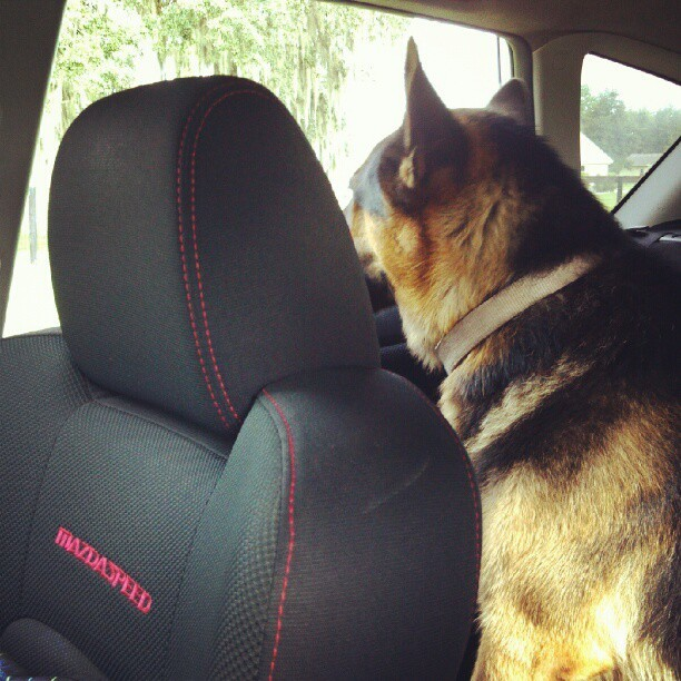 Taking koda to his year check up :) #germansheparddog (Taken with Instagram)