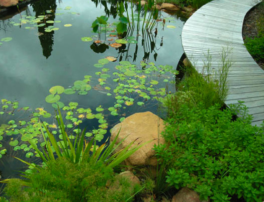 Designed by Cape Town, South Africa firm Beyer Honig Landscapes.