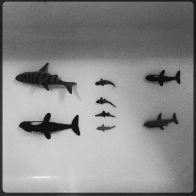 tub fish in formation.