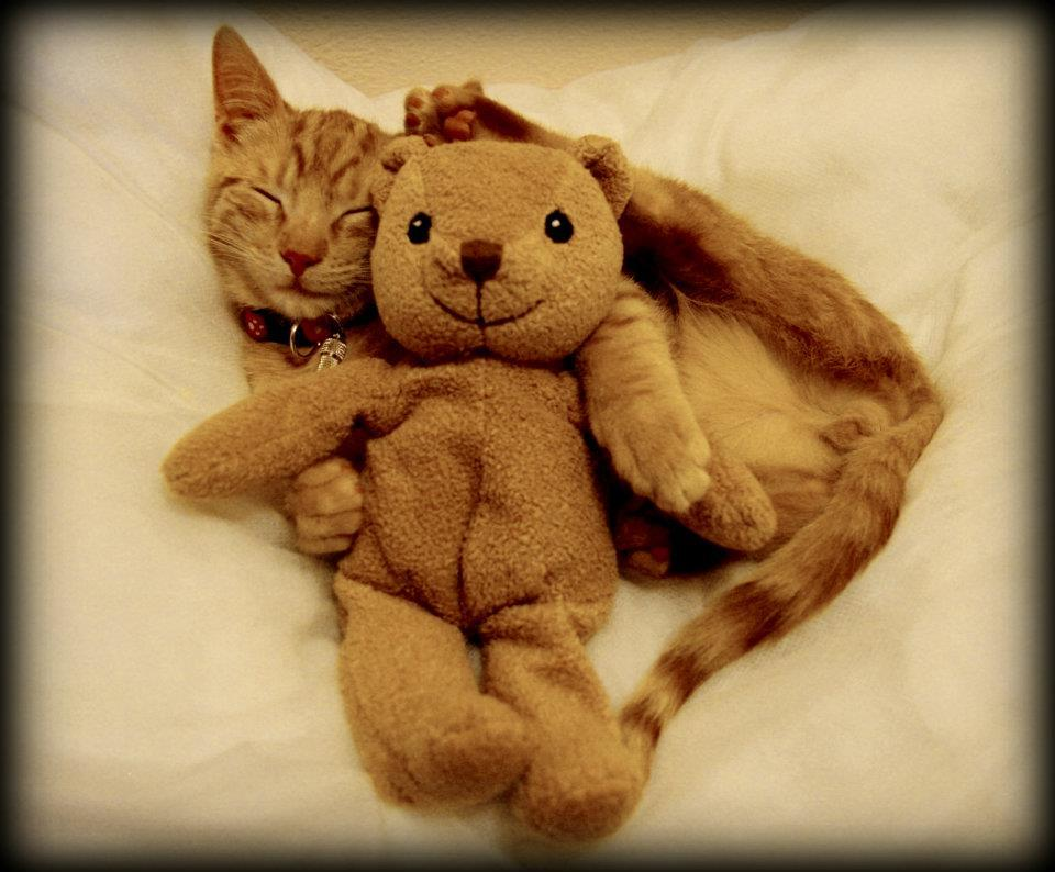 Ginger Happiness Photo via Cats Soup