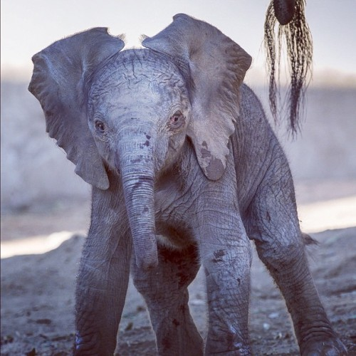 Looking for a smile? Here ya go. #elephant #calf (Taken with Instagram)