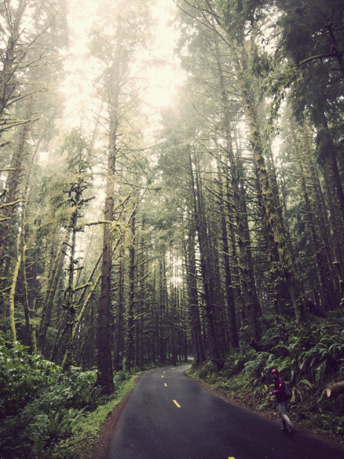 ferfuxsake:  fuckyeahhiking:  Exiting Ecola State Park, Oregon Coast mychack   Take me to Oregon!