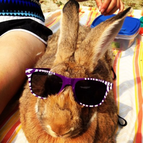 Bunny on the Beach Bunny on the beach! Bunny on the beach! C'mon you guys, why aren't you chanting?