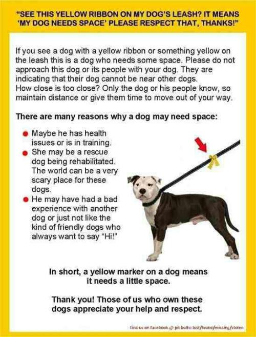 spastasmagoria:  Fyi about yellow markers on dog leads.   I need this.