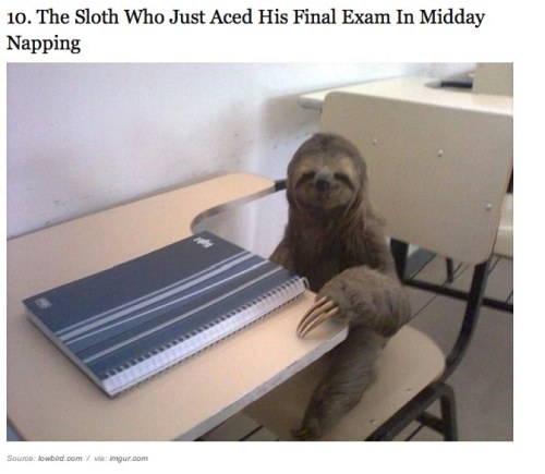 & 24 other animals who are excited to go back to school