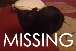 thelocalrapist:  My little cat Dolly is missing.  She's a house cat so she's not very familiar with the outdoors. She went missing in the West Cross/Mumbles area of Swansea, South Wales. We think that she has been either taken in by someone or stolen :( Please could you reblog this to help find my little baby :( I miss her so much. As does her brother Baban, who is constantly crying and searching for her. He's pulled out all of her toys and everything. If anybody sees her, please do get in contact with me either on here or on Facebook. My name is Roberta Rae. Thank you x