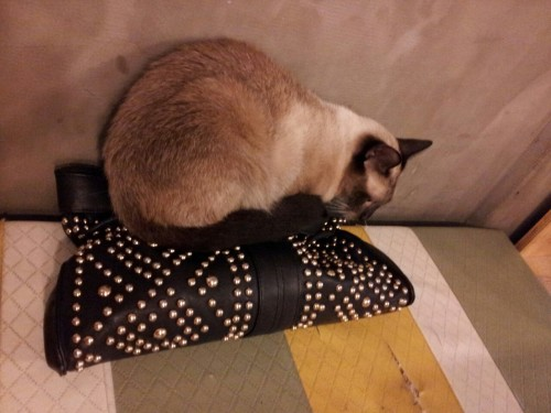 Went to a cat cafe last week. The kitties loved sleeping on my bag for some reason. Personally I think it looks really uncomfortable because of the studs but whatever, cats are dumb.