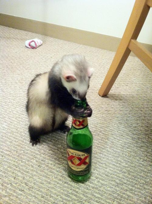 whatareyoudoingferret:  What are you doing?