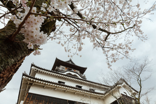 heartisbreaking:  Inuyama Castle, Japan by Nobythai on Flickr.