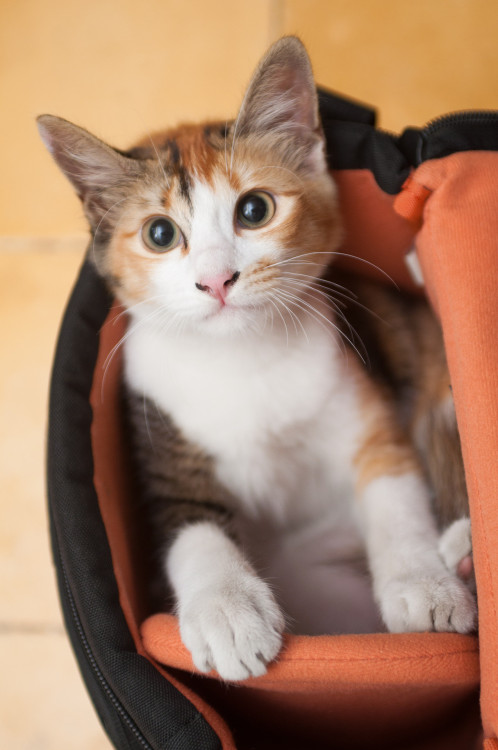 PHOTO OP: Kitty in a Camera Bag Via a_salaryman.
