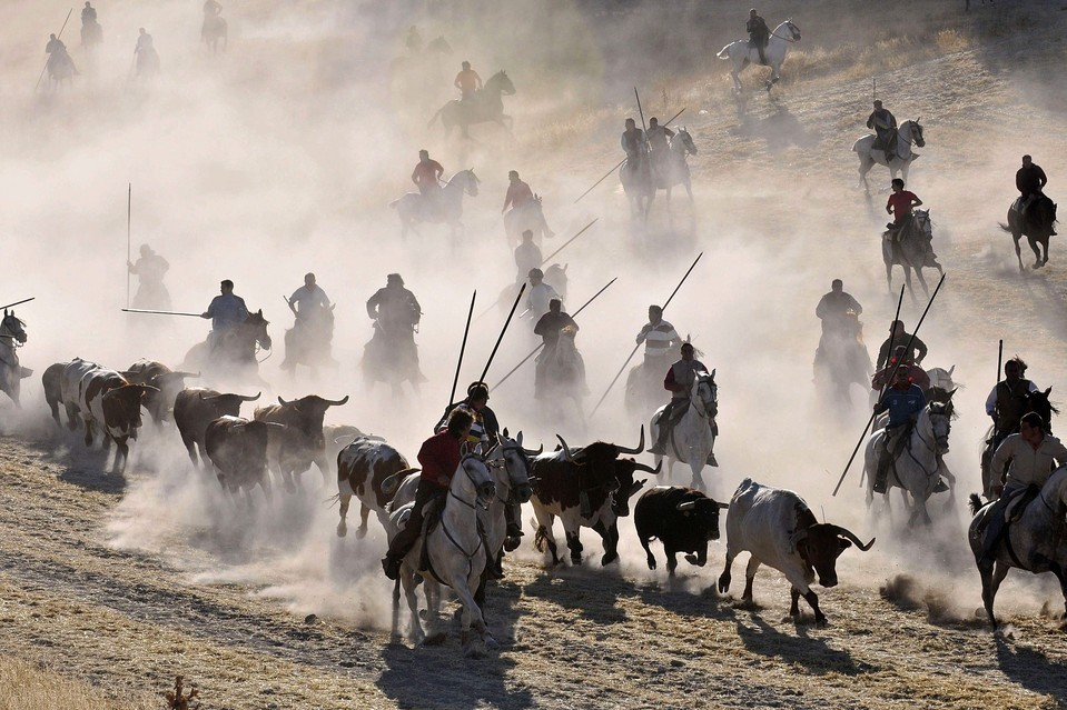 Horsemen led bulls during a bull run in Cuéllar, Spain, Thursday. Cuéllar's is considered to be the oldest running of the bulls of Spain. Juan Martin Misis/European Pressphoto Agency