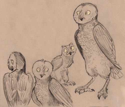 a bunch of weirdo owls