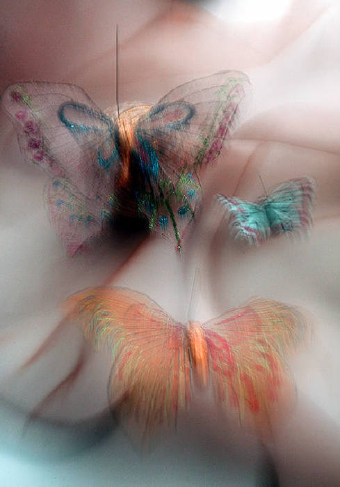 art-and-dream:  tendresse butterfly  photographer - Maria Pleshkova