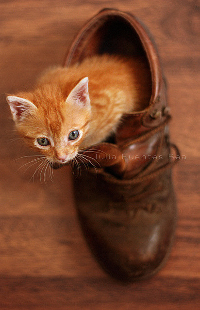 kittenjoy:  Baby Pumpkin by Marmalade Girl on Flickr.