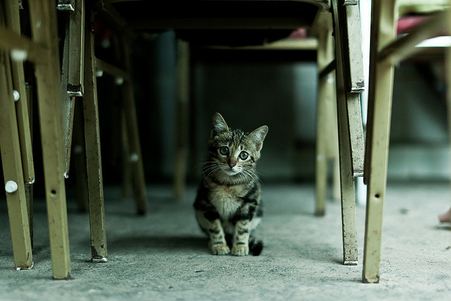kittenjoy:  untitled by :: ZP :: on Flickr.