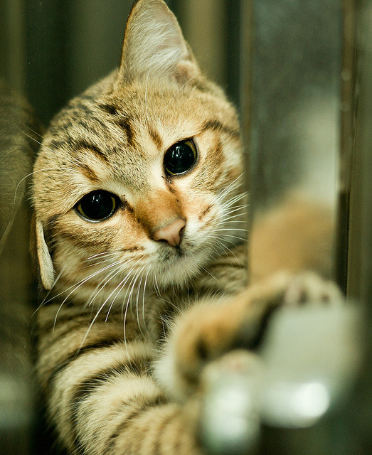 kittenjoy:  A Stuck Cat by Stagnant Life & Bearangel on Flickr.