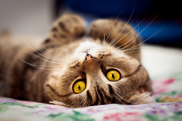 kittenjoy:  My eyes have seen you by memberx on Flickr.