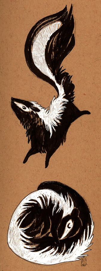 Skunks Black and white ink.  August 2012.