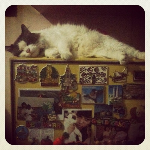 hellomisslipsy:  tewas diatas kulkas! #pets #cats #sleep 😘🎉 (Taken with Instagram)  DOES ANYONE NOTICE THE PICTURE OF SOMEONE HOLDING THE CAT IN THE DIRECT CENTER ON THE BOTTOM?  :)   SO AWESOME!