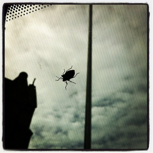 Big on my windscreen (Taken with Instagram)