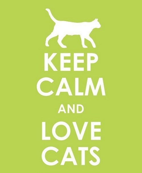 catasters:  Keep Calm and Love Cats