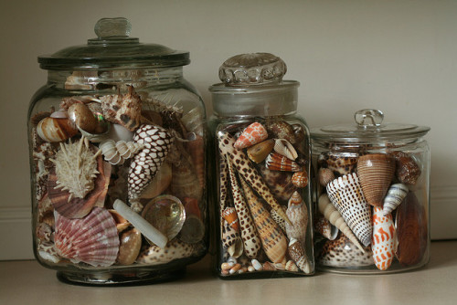 SHELL'S SHELL'S & MORE SHELLS. by jennyw47 on Flickr.