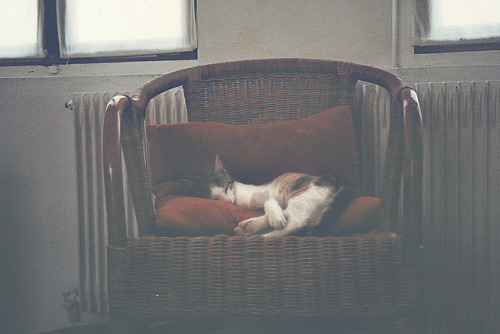 Analog Photography - The Best life ever by Baptiste Okala on Flickr.lazy days