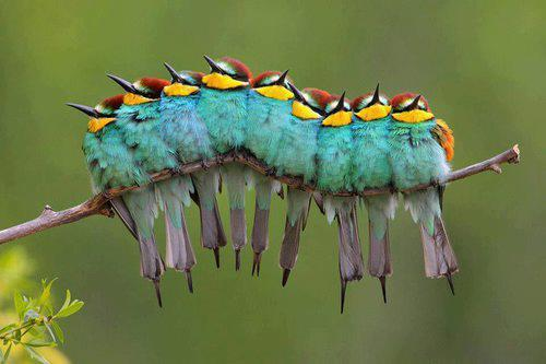 mer-de:  downwithdopamine:  I love these cute birds. It reminds me of pixar and their little animations!   wtf i thought that was a caterpillar