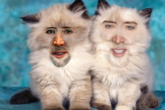 Fuck you, Nicolas Cage. Even as a cat I still hate you. lol