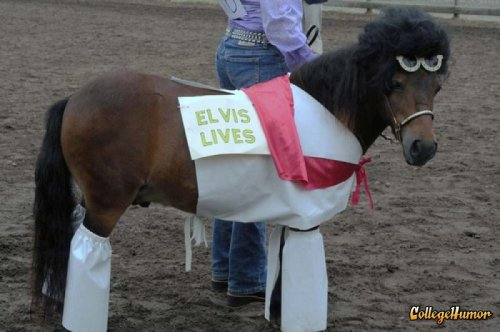 Elvis Lives on as a Horse A very sad horse.