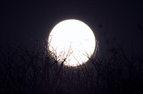 Rising Blue Moon by Astro-Tanja on Flickr.