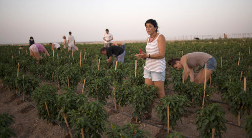 "Spanish workers take over farm land to protest the horribly nonsensical consequences of capitalism August 2012 Outmaneuvering the police, hundreds of jobless farmworkers charged through a hole in a fence and turned the manicured gardens of a vacant estate here in Spain's agricultural heartland into a lively fairground of protest this week. Men more accustomed to working in the fields lounged in the shade beside a pink palace, picnicked on paella and spent a night relaxing. Some even took a dip in the pool. ""We're here to denounce a social class who leaves such places to waste,"" said Diego Cañamero, the leader of the Andalusian Union of Workers, addressing the demonstrators who had occupied the property, the Palacio de Moratalla. For all of the estate's grandeur, the owner, the Duke of Segorbe, lives in Andalusia's capital, Seville, about 60 miles away. The occupation was a demonstration of the class conflicts that simmer amid complaints about austerity andjoblessness in Spain. Such protests have gathered pace in this farm region in Spain's south in recent weeks, adding a volatile dimension to the country's economic downturn. They have also pointed to a deeper anger about the shape of Spain's economy and democracy. The resentment here over land that has been left uncultivated at a time of deepening recession and record joblessness reaches beyond local politicians and landowners to European Union bureaucrats. Agricultural subsidies are criticized by many here as favoring landed interests, paying them not to grow crops when nearly a third of the work force in Andalusia is unemployed. Source"