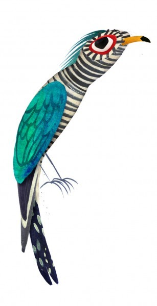 "Brendan Wenzel, ""Asian Emerald Cuckoo"""