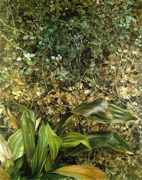 alongtimealone:  Lucian Freud - Two Plants, 1977-80. Oil on canvas (by BoFransson)