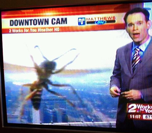 Well, we had a good run as the dominant species on the planet. Giant wasps win.