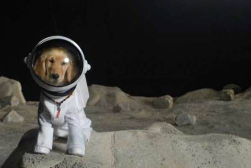Dogz on the Moon. Is that a movie yet? Because it totally should be. photo via cute overload
