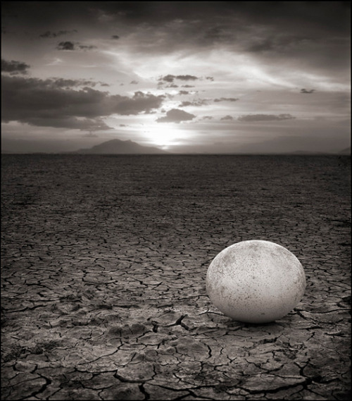 random-brilliance:  Abandoned Ostrich Egg, 2010, Nick Brandt