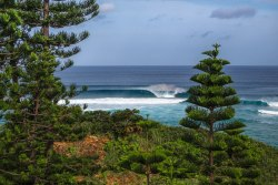 Where's this Norfolk Island Pine-lined stretch of shore?? I bet you didn't guess Japan…