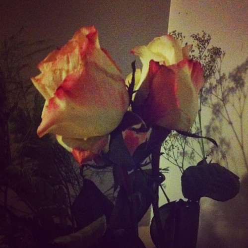 Craig got me roses again! (Taken with Instagram)
