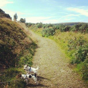 #instamood #instanature #nature #dogs #sky #walking #mountain #pretty #grass #jackrussell #trees #ilovetagging