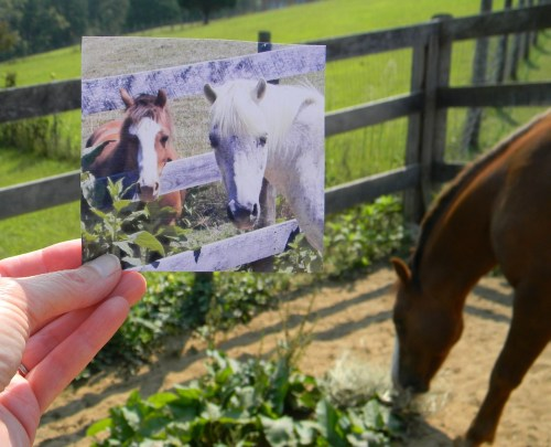 dear-photograph:   Dear Photograph, The ponies met at the fence for the very first time 2 years ago. One was old and the other young.  The old, gray, huggable, and kind gentleman died this summer in his 25th year. After he was gone, we were pleased to find a bird nest which held some of his white hair.  It was a comfort to know his fur had been woven into a home for the baby wrens while they waited for their wing feathers to grow and learned to fly. Abby