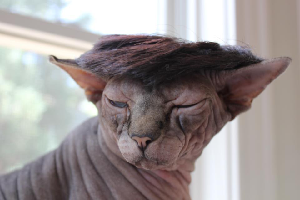 """Excuse me, did you say hairless?"" Photo by ©Daily Yogi - Yogi Facebook"