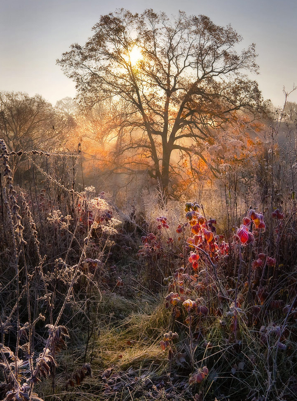 ecocides:  Autumn story: oak, raspberry and Frost | image by Alexander Kitsenko