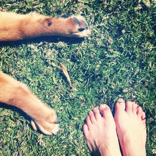 Standard Sunday on the grass. #sun #sunday #dog #paws #grass #pet (Taken with Instagram)