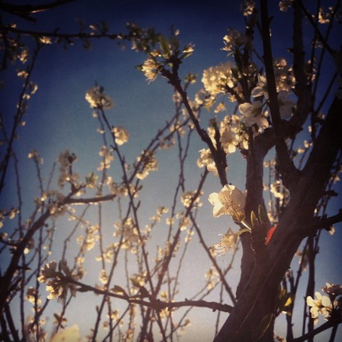 Spring 💛 (Taken with Instagram)